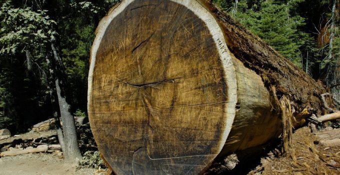 Tipos de madera resistentes a la termitas