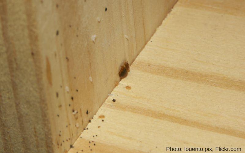 la madera atrae cucarachas pregunta