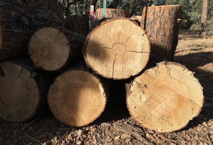 la madera de pino es resistente al agua